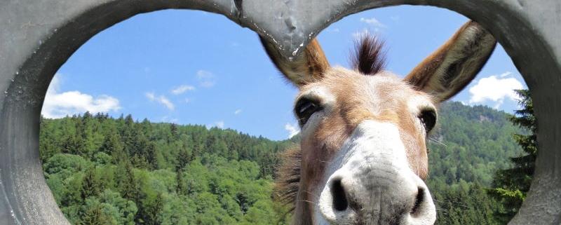 (Bild/Foto unter Lizenz 35645847 von sandra zuerlein – stock.adobe.com